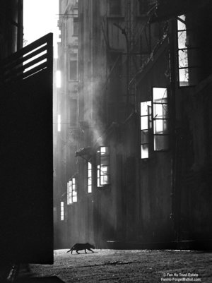 TheSearch FAN HO     Il primo street-photographer