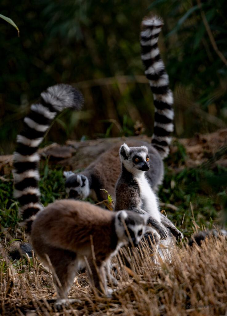 PhotoTravelling-sito-1-2-2-737x1024 Fotografia Naturalistica