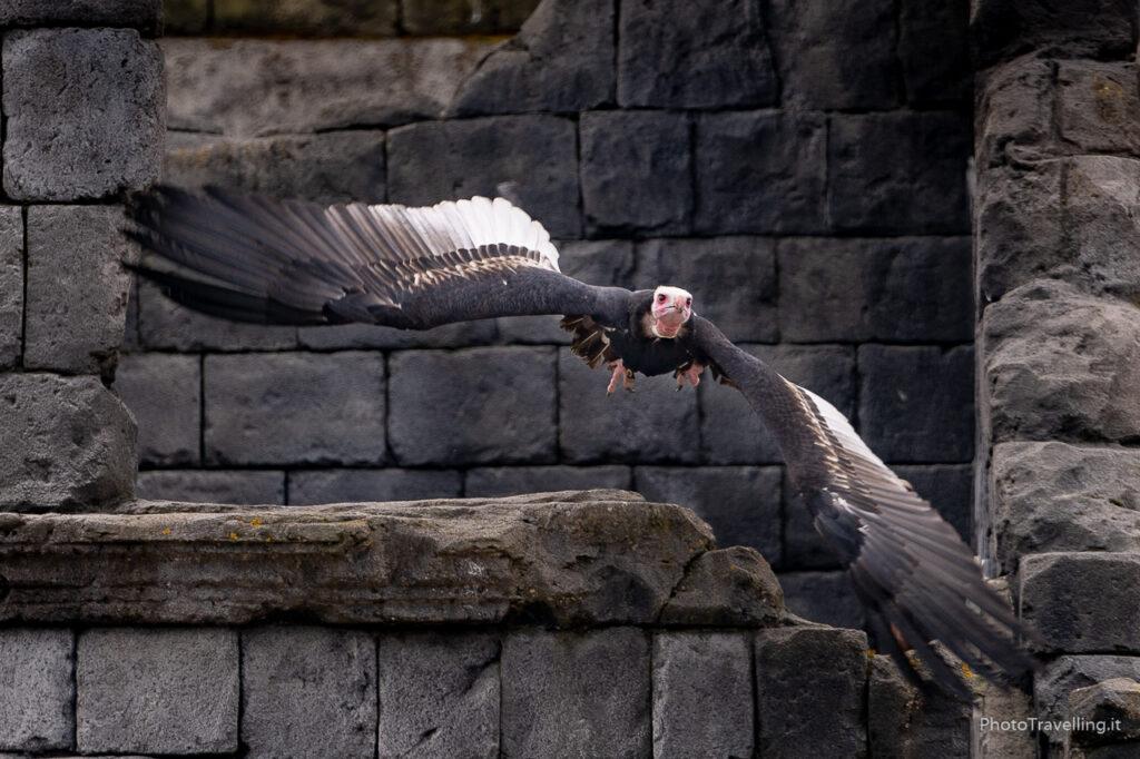 PhotoTravelling-sito-xx-1-13-1024x682 Fotografia Naturalistica