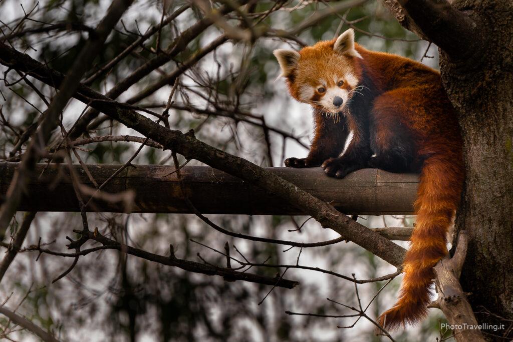 PhotoTravelling-sito-xx-1-15-1024x683 Fotografia Naturalistica