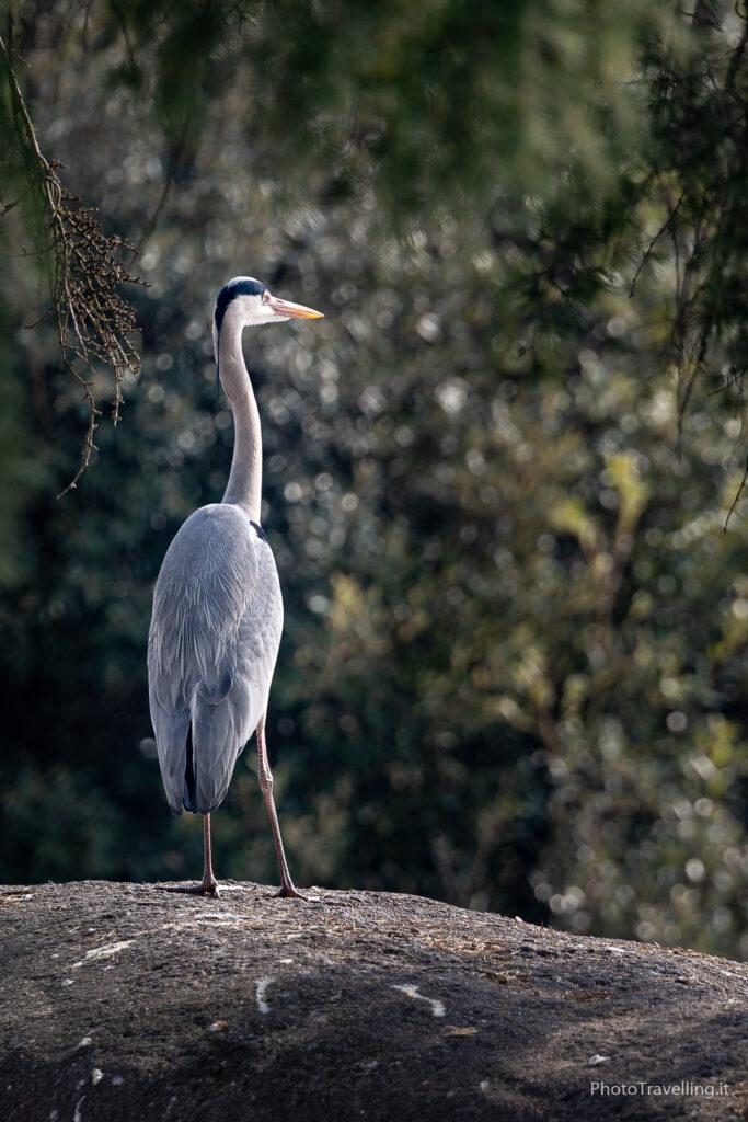 PhotoTravelling-sito-xx-1-21-683x1024 Fotografia Naturalistica