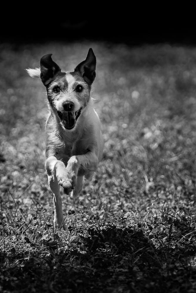 Phototravelling.it-1-di-1-10 Fotografiamo i nostri amici animali