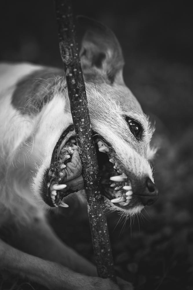 Phototravelling.it-1-di-1-12 Fotografiamo i nostri amici animali