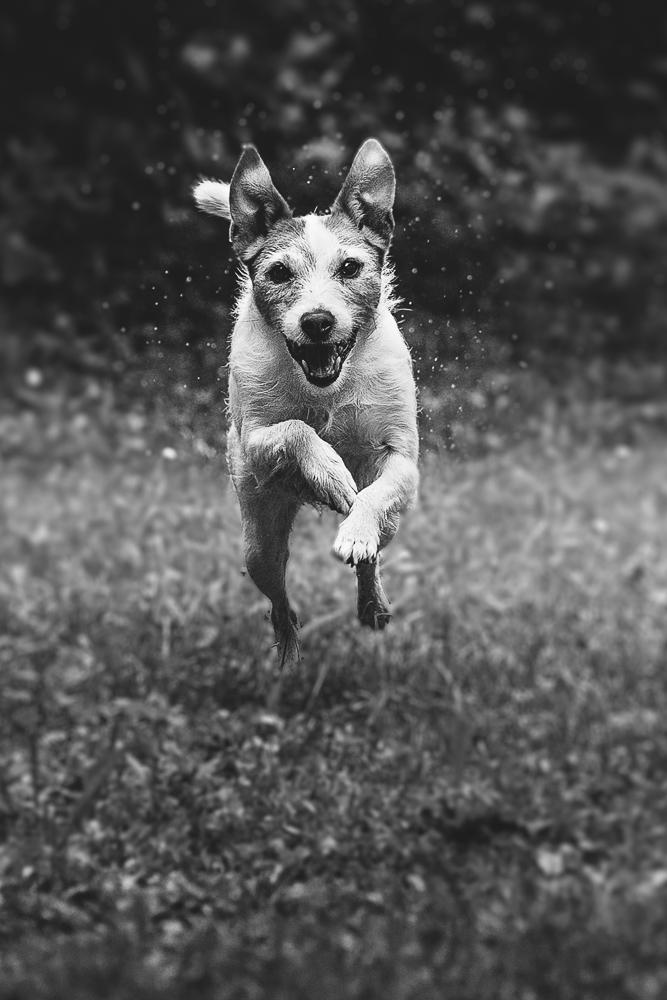 Phototravelling.it-1-di-1-2 Fotografiamo i nostri amici animali