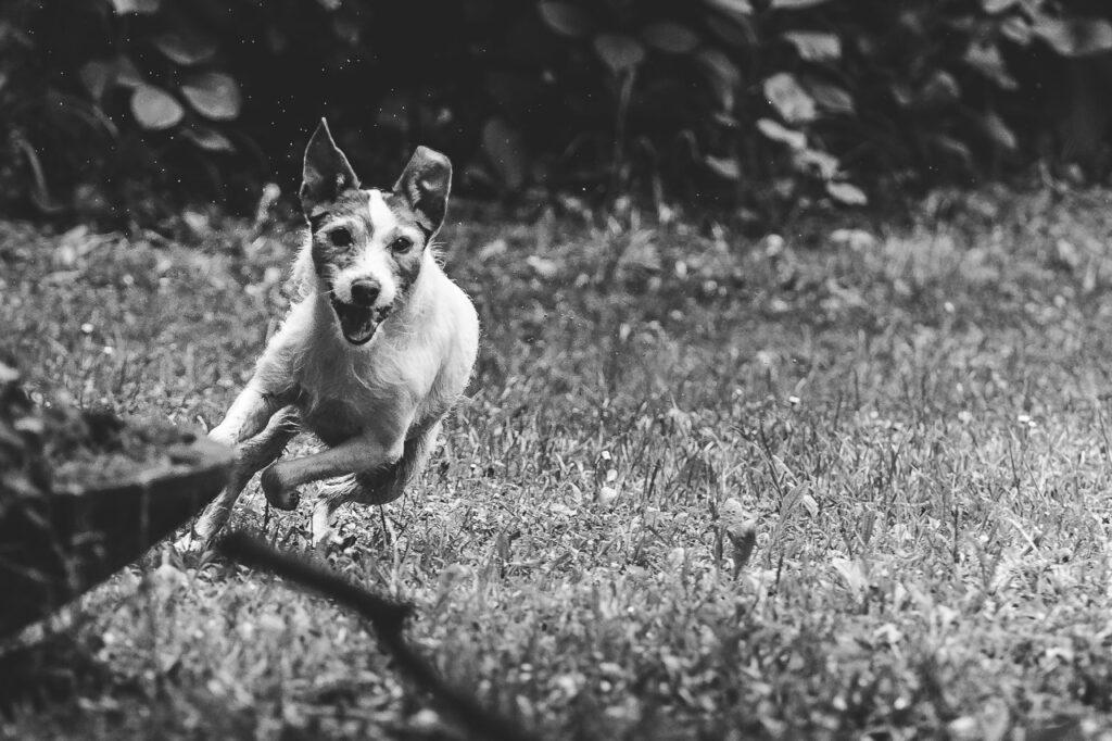 Phototravelling.it-1-di-1-3-1024x682 Fotografiamo i nostri amici animali