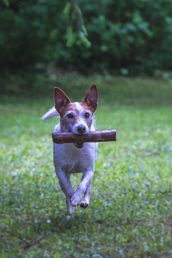 Phototravelling.it-1-di-1-4 Fotografiamo i nostri amici animali