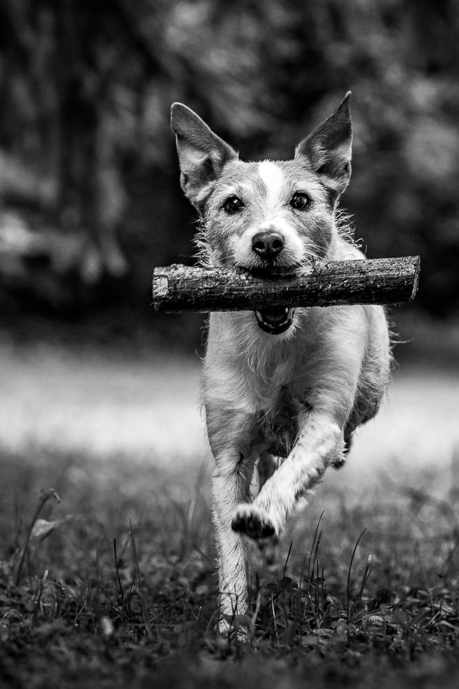 Phototravelling.it-1-di-1-5 Fotografiamo i nostri amici animali