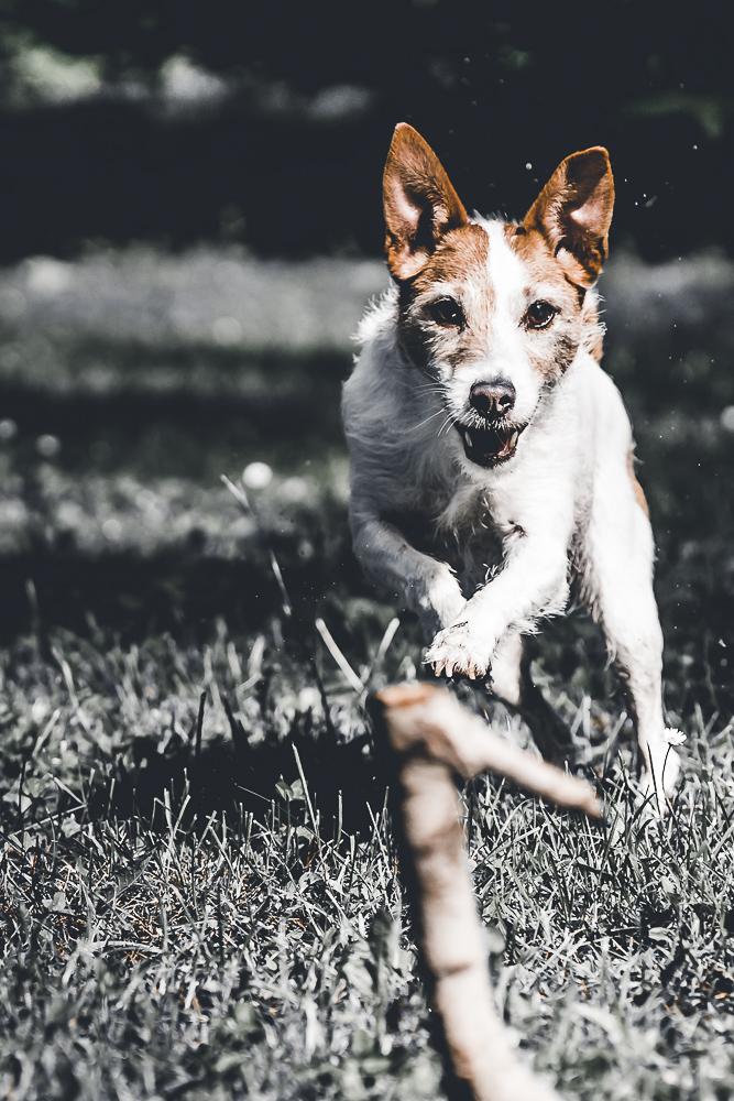 Phototravelling.it-1-di-1-8 Fotografiamo i nostri amici animali