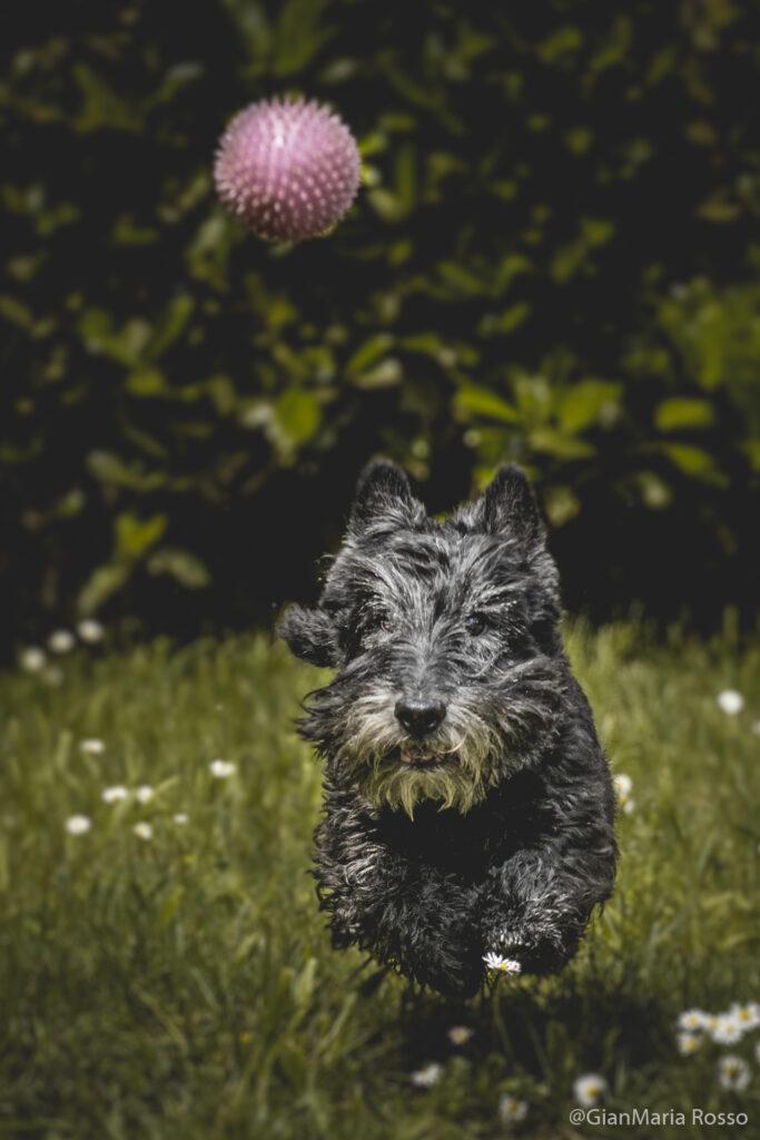 Phototravelling.it-2-2-683x1024 Fotografiamo i nostri amici animali